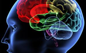 Dolore al ginocchio: tutta questione di cervello?