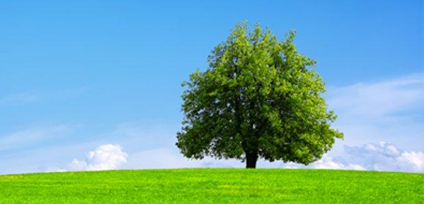 Dagli alberi un prezioso aiuto alla scienza