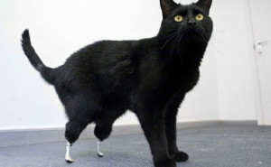 animali_protesi