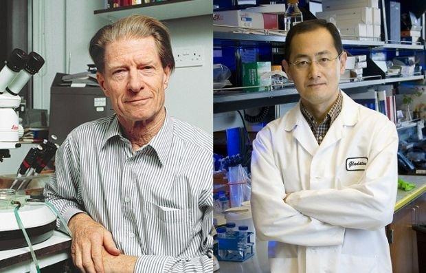 Cellule staminali da premio Nobel
