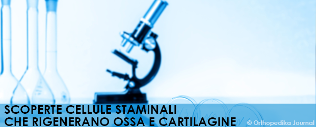 SCOPERTE CELLULE STAMINALI CHE RIGENERANO OSSA E CARTILAGINE